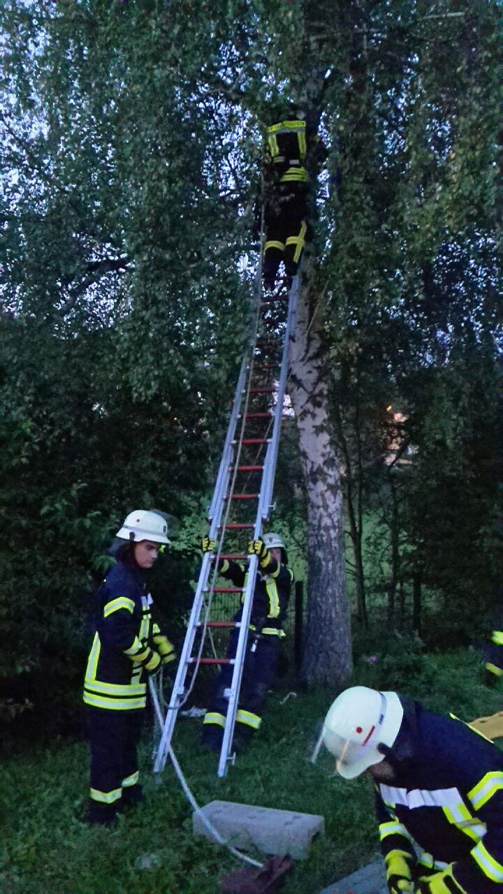 Gleitschirmflieger Im Baum